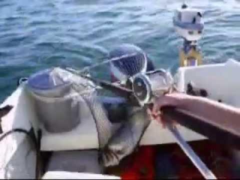 Poole Bay Fishing