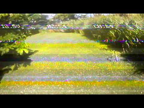 08/26/17 eachine racer 250 screen recorder Patsy Mink park -1