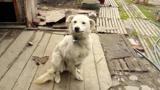 Собака которая улыбается  😃😃😃 The dog that smiles