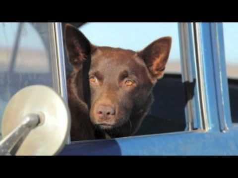 Red Dog - 'The Search' (By Cezary Skubiszewski)