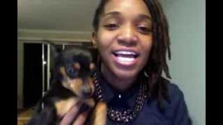 New Years Eve 2013. Miniature Pinscher & A Dreadhead :-)