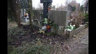 Dziki ryją na cmentarzu przy Poprzecznej w Olsztynie