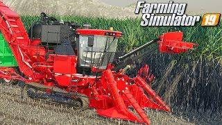Trzcina cukrowa - Farming Simulator 19   #67