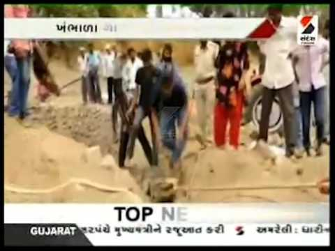 13 Crocodile Rescued At Porbandar, Gujarat