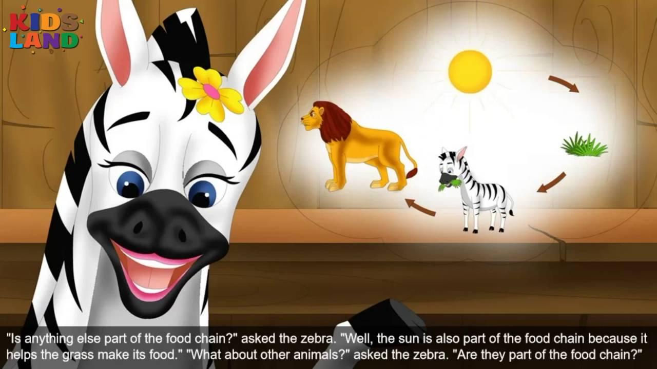 Maxresdefault on Zebra Food Chain