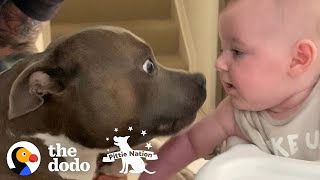 The Wildest Pittie Eats Out Of His Baby Sister's Hands | The Dodo Pittie Nation