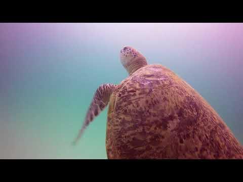 Scuba Diving Sipadan