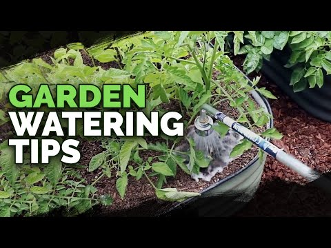 5 Watering Mistakes You're Probably Making