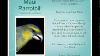 Native Hawaiian Birds of Hawaii and their Bird Calls