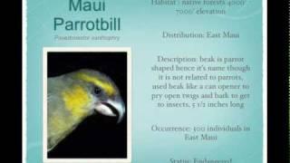 Native Hawaiian Birds of Hawaii and their Bird Calls