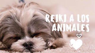 Reiki a los animales. Como darle una sesión de Reiki a un perro.