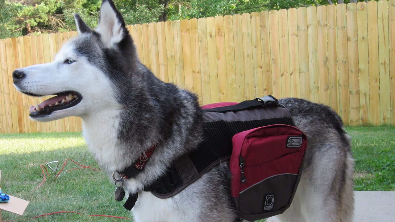 Dog Backpacks! Ready for Camping! - Wordless Wednesday! - YouTube