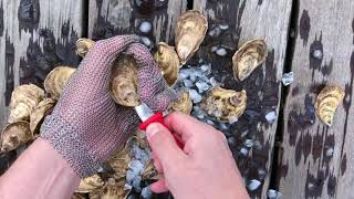 Oysters XO Step 3 of How to Shuck an Oyster (3/5)