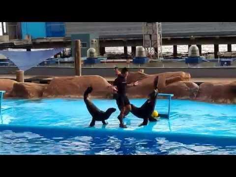 Manila Ocean Park - Sea Lion Show  04/26/2016
