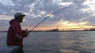 Huge salmon Lake Michigan Salmon fishing Killer King Salmon--No Trolling Lake Michigan!