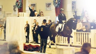 MILLION EURO HORSES at the PSI auction