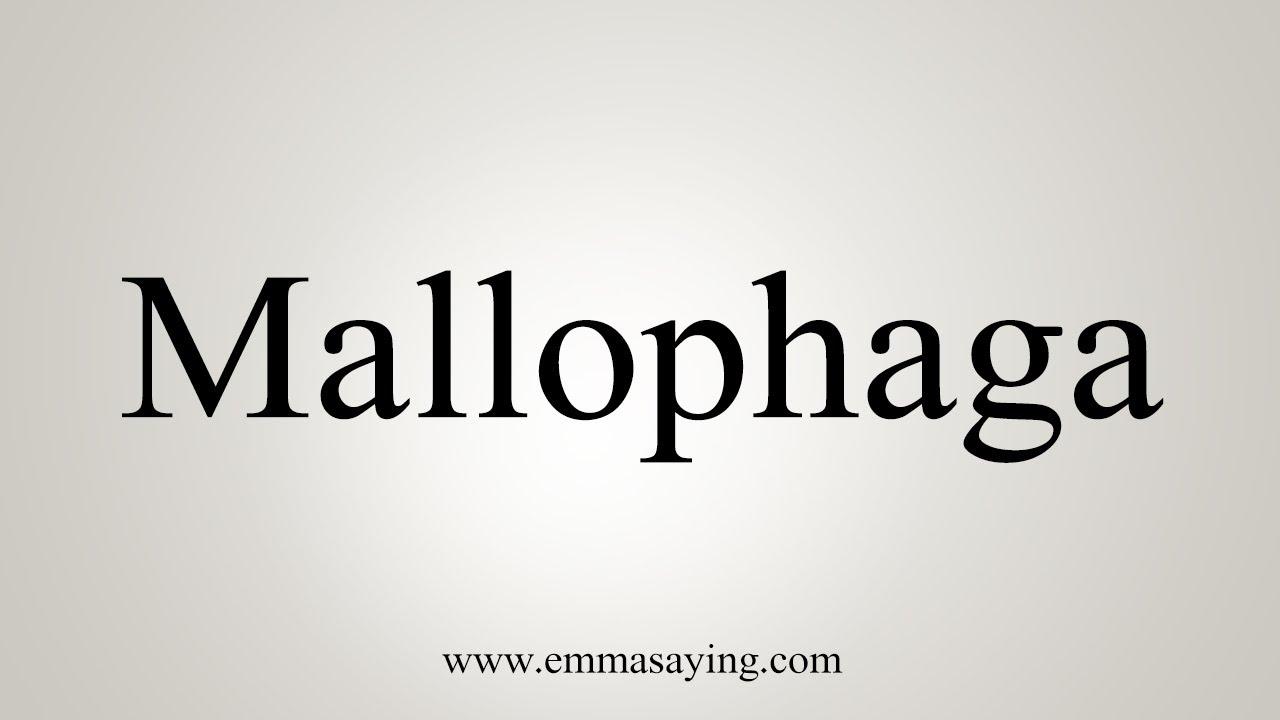 phthiraptera pronounce