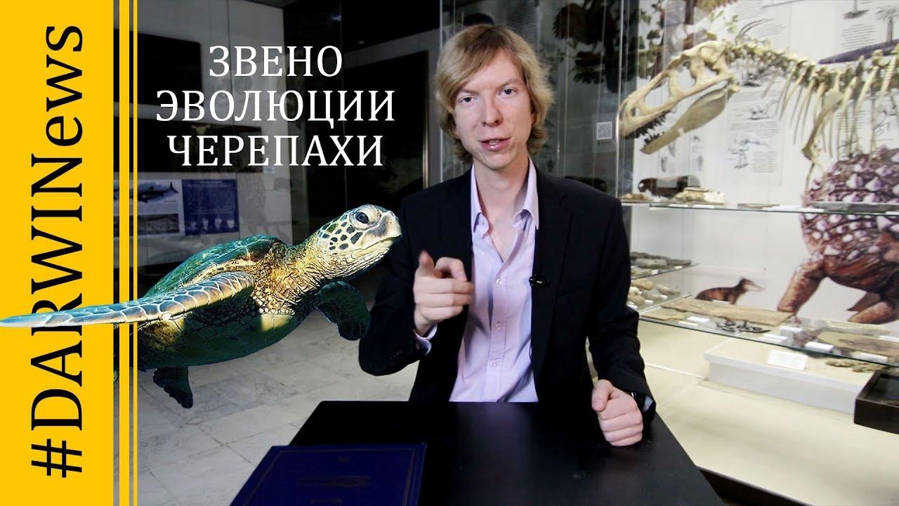 Новое переходное звено в эволюции черепах. Ярослав Попов. #DARWINEWS