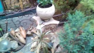 Гостевой дом, летучая мышь. Алушта, Крым(, 2016-05-18T16:07:51.000Z)
