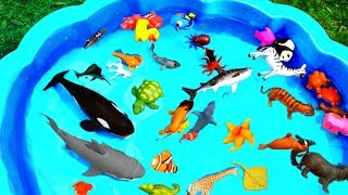 Learn Colors With Animals For Kids with Sharks in Blue Water Tub Toys For Kids