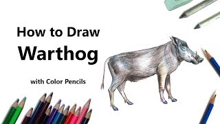 How to Draw a Warthog with Color Pencils [Time Lapse]