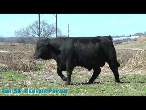 Lot 58  Genetic Power
