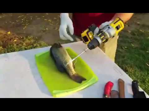 How To Clean Fish The Easy Way