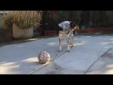 OMG: Real Life Talking Dog