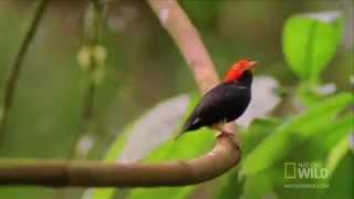 Chim nhảy giật lùi như Michael Jackson   VnExpress