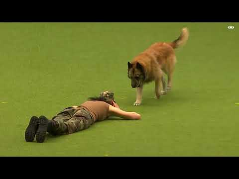 EXTREME Worlds best trained dog Deserves a full watchfbdown me