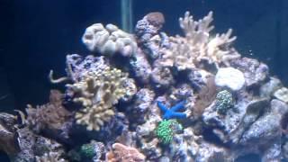 200G Cube Reef aquarium