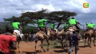 Camel Derby 2013
