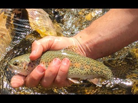 FISHING SMALL CREEKS FOR HIGH MOUNTAIN TROUT