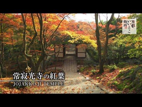 常寂光寺の紅葉 / Jojakko-ji Temple / 京都いいとこ動画