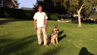 Sirius K9 Academy Basic Obedience Test Demonstration - Sit @ Side