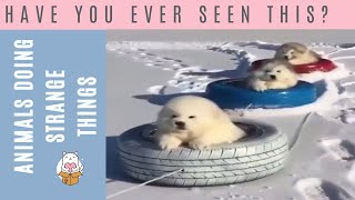 Why Animals Are Amazing - Funny Animal Compilation