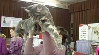 Выставка кошек . Все О Домашних Животных.
