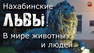44.Нахабинские львы.В мире животных и людей.Кадыкчанский.ТартАрия.инфо.