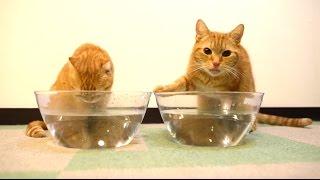 猫はぬるま湯と水はどっちが好き?