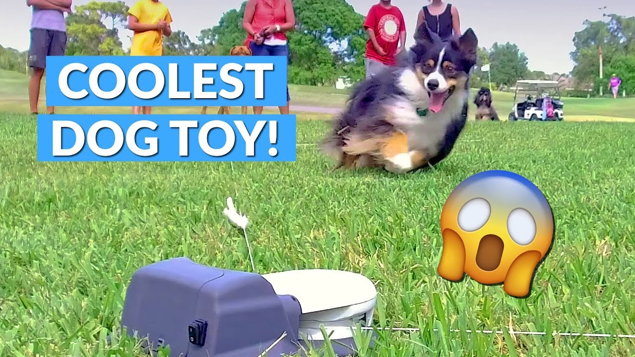 Capture The Flag Remote Control Dog Toy