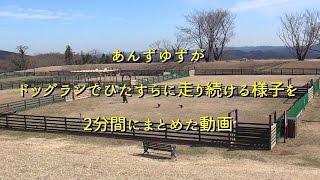 http://ameblo.jp/creamanzu/entry-11993512456.html.