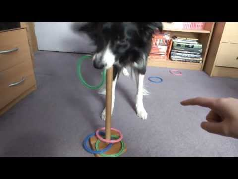 2 new dog tricks from Bella