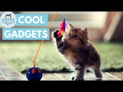 10 Cool Gadgets And Cat Toys