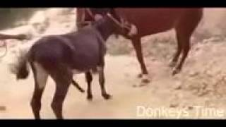 Donkey mating Ride time Donkeys mating