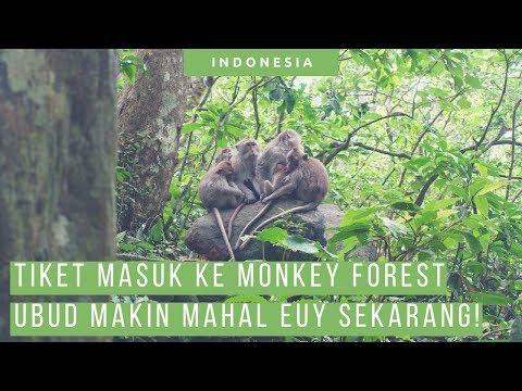 Main Ke Monkey Forest Ubud, Tiketnya Makin Mahal! [ Wisata Bali ]