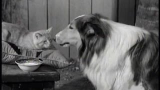 """Lassie - Episode #168 - """"The Cat Who Came To Dinner"""" - Season 5, Ep. 25 - 02/22/1959"""