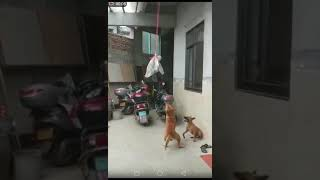 happy & funny dog 开心搞笑狗狗狗狗,guess the result