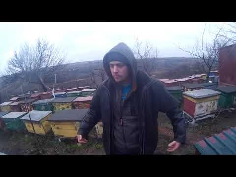 Прогноз по оптовой цене на мед Украина