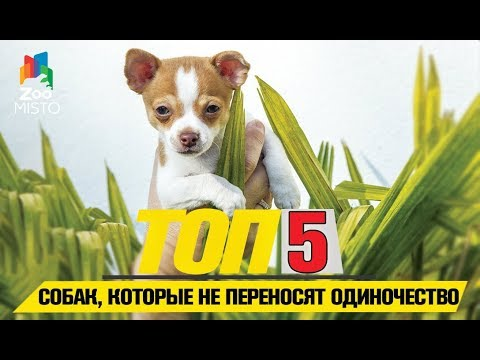 Топ 5 пород собак, которые не переносят одиночество