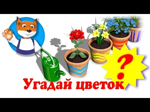 Незабудка: виды и сорта - Садовые растения и цветы